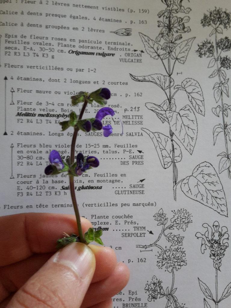 Extrait de la flore de Jeanne Covillot