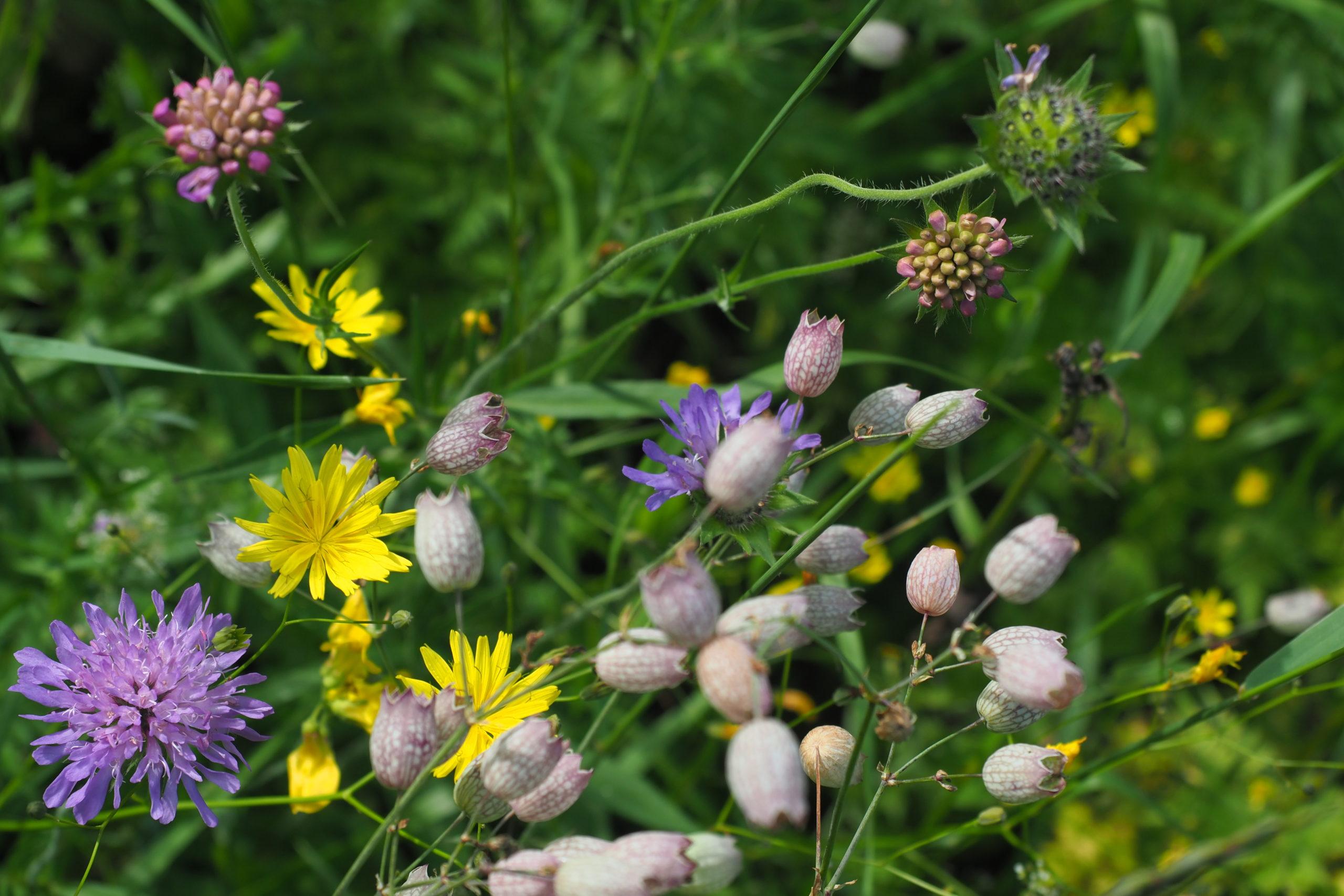 Ouverture des inscriptions à la formation plantes sauvages de septembre 2020 à Grenoble!