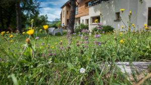 Journée découverte des plantes sauvages, Lans en Vercors