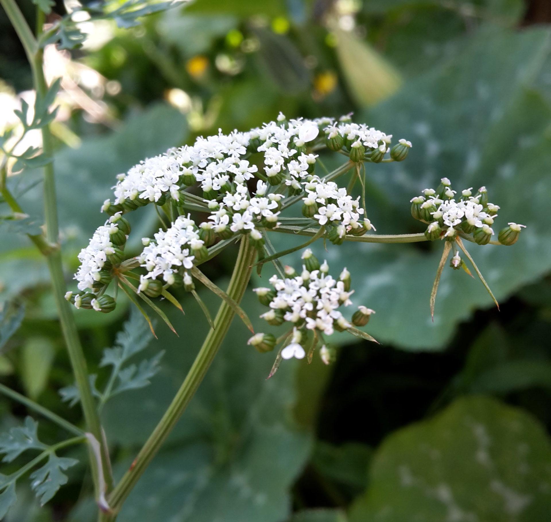 Plantes sauvages et sécurité