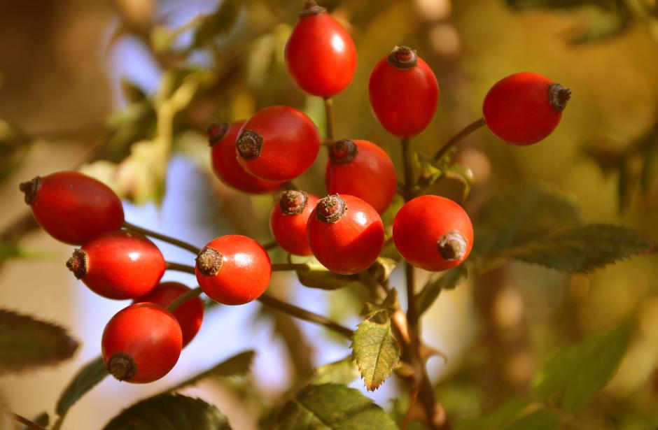 L'automne est là, avec ses multiples fruits sauvages et ses semences à distribuer