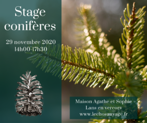 Stage conifères et genévrier commun